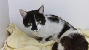 kotek w lecznicy weterynaryjnej